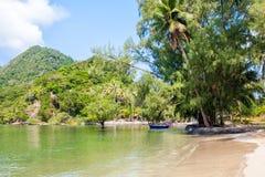 Tropischer Strand mit Kokosnusspalme stockbild