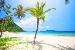 Tropischer Strand mit Kokosnusspalme stockbilder