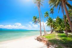 Tropischer Strand mit Kokosnusspalme lizenzfreie stockbilder