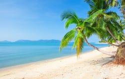 Tropischer Strand mit Kokosnusspalme lizenzfreie stockfotografie