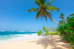 Tropischer Strand mit Kokosnusspalme lizenzfreie stockfotos