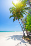 Tropischer Strand mit Kokosnusspalme und -meer lizenzfreie stockfotos