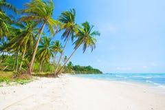 Tropischer Strand mit Kokosnusspalme und -meer lizenzfreie stockfotografie