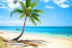 Tropischer Strand mit Kokosnusspalme und -meer lizenzfreie stockbilder