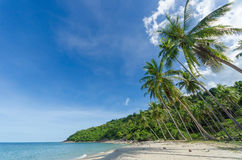 Tropischer Strand mit Kokosnusspalme und perfektem Himmel im Süden von Thailand lizenzfreie stockfotos