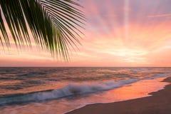 Tropischer Strand mit Palme Stockfoto