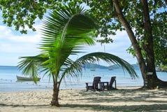 Tropischer Strand mit Palme und zwei Stühle auf Sand stockbilder