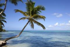 Tropischer Strand mit Palmen Lizenzfreies Stockfoto