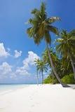Tropischer Strand mit Palmen stockfotografie