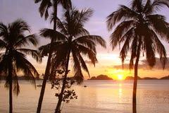 Tropischer Strand mit Palmen bei Sonnenuntergang, EL Nido, Palawan-Insel, die Philippinen Lizenzfreies Stockbild