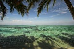 Tropischer Strand mit Palmen und blauem Himmel Stockfotos