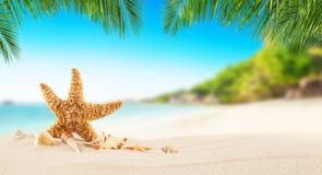 Tropischer Strand mit Seestern auf Sand, Sommerferienhintergrund stockfotos