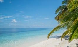 Tropischer Strand mit undeutlicher Kokosnuss verlässt im Vordergrund stockfoto