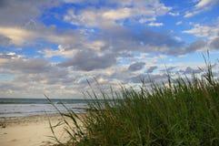 Tropischer Strand mit Vegetation Stockbild