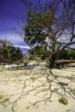 Tropischer Strand Sabahs stockbilder