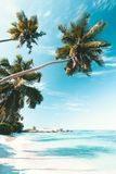 Tropischer Strand in Seychellen Stockbild