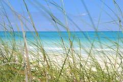 Tropischer Strand und Gras lizenzfreie stockfotografie