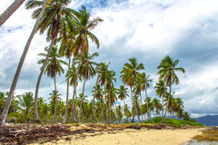 Tropischer Strand und grauer Himmel lizenzfreie stockfotos