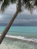 Tropischer Sturm und Palme Stockfotografie