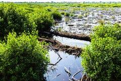Tropischer Sumpf Lizenzfreies Stockfoto