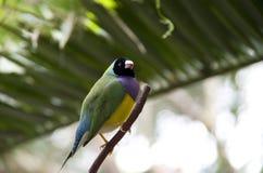 Tropischer Vogel Stockbilder