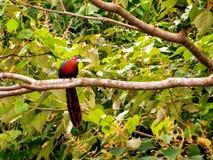 Tropischer Vogel, der auf der Niederlassung hockt Lizenzfreie Stockfotos