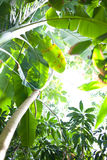 Tropischer Wald stockfotos
