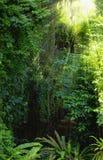 Tropischer Wald Lizenzfreie Stockfotos