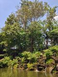 Tropischer Wald Stockfoto