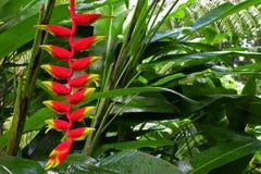 Tropischer Wald Lizenzfreies Stockfoto