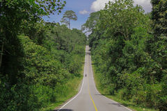 Tropischer Wald Lizenzfreie Stockbilder