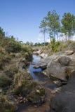 Tropischer Wald auf Hintergrund des blauen Himmels lizenzfreie stockbilder