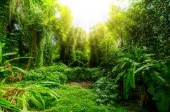 Tropischer Wald, Bäume im Sonnenlicht und Regen Lizenzfreies Stockfoto
