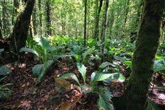 Tropischer Wald in Canaima Nationalpark, Venezuela lizenzfreie stockfotografie