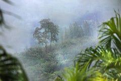Tropischer Wald im Regen- und Nebelnebel Stockbilder