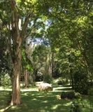 Tropischer Wald mit gebürtigen Bäumen stockfotos
