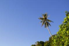 Tropischer Wald mit Palme auf Himmelhintergrund Sommerferien-Fahnenschablone mit Platz für Text Lizenzfreie Stockfotos