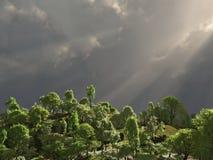 Tropischer Wald mit Strahlen der Leuchte Stockfoto