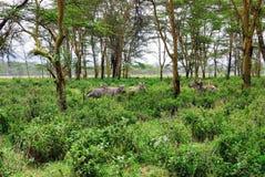 Tropischer Wald in Ostafrika lizenzfreie stockfotografie