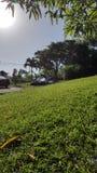 Tropischer Wald in San Sebastian, Puerto Rico lizenzfreie stockbilder