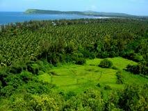 Tropischer Wald und Küstenlinie Lizenzfreies Stockbild