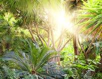 Tropischer Waldhintergrund lizenzfreies stockfoto