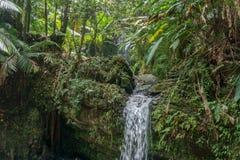 Tropischer Wasserfall stockfoto