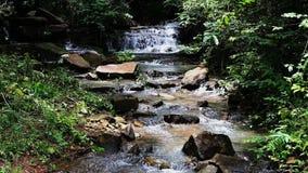 Tropischer Wasserfall HD in forrest stock video footage