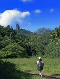 Tropischer Weg stockfotografie
