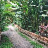 Tropischer Weg in Bali Lizenzfreies Stockbild
