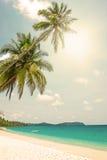 Tropischer weißer Sand mit Palmen Stockbild