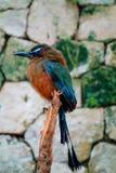 Tropischer wiled Vogel Stockfotos