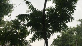 Tropischer Wind rührt die Blätter stock video