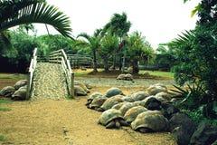 Tropischer Zoo Stockfotos